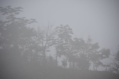 Free stock photo of cloudy, fog, forest