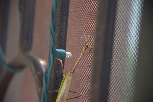 Free stock photo of detail, door, praying mantis