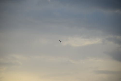 Free stock photo of birdwatching, clouds