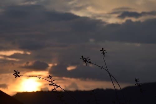Free stock photo of orange, skies