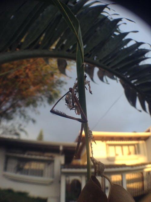 Free stock photo of dead bug, spiderweb