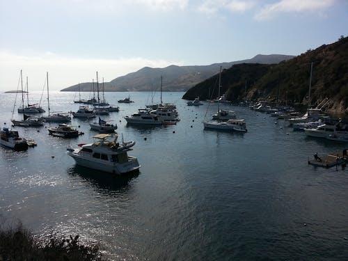 Ảnh lưu trữ miễn phí về catalina, du thuyền, Hải cảng