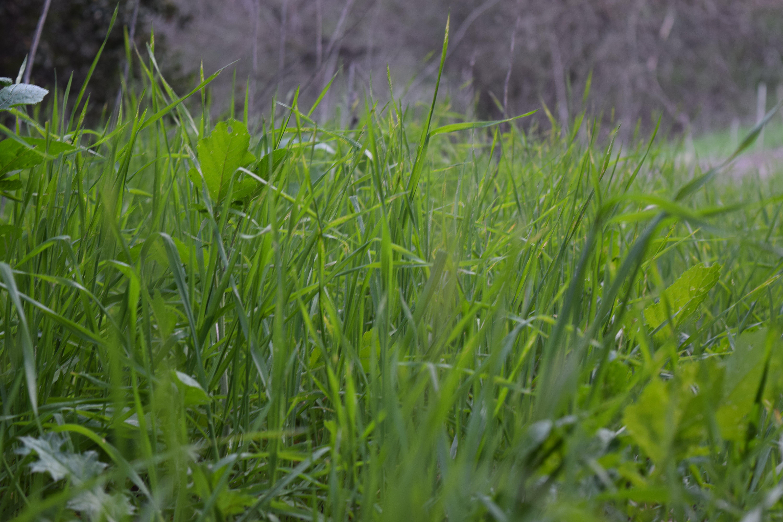 Gratis lagerfoto af græs, græsmark, græsstrå