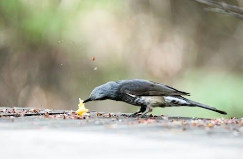 Darmowe zdjęcie z galerii z #ptak