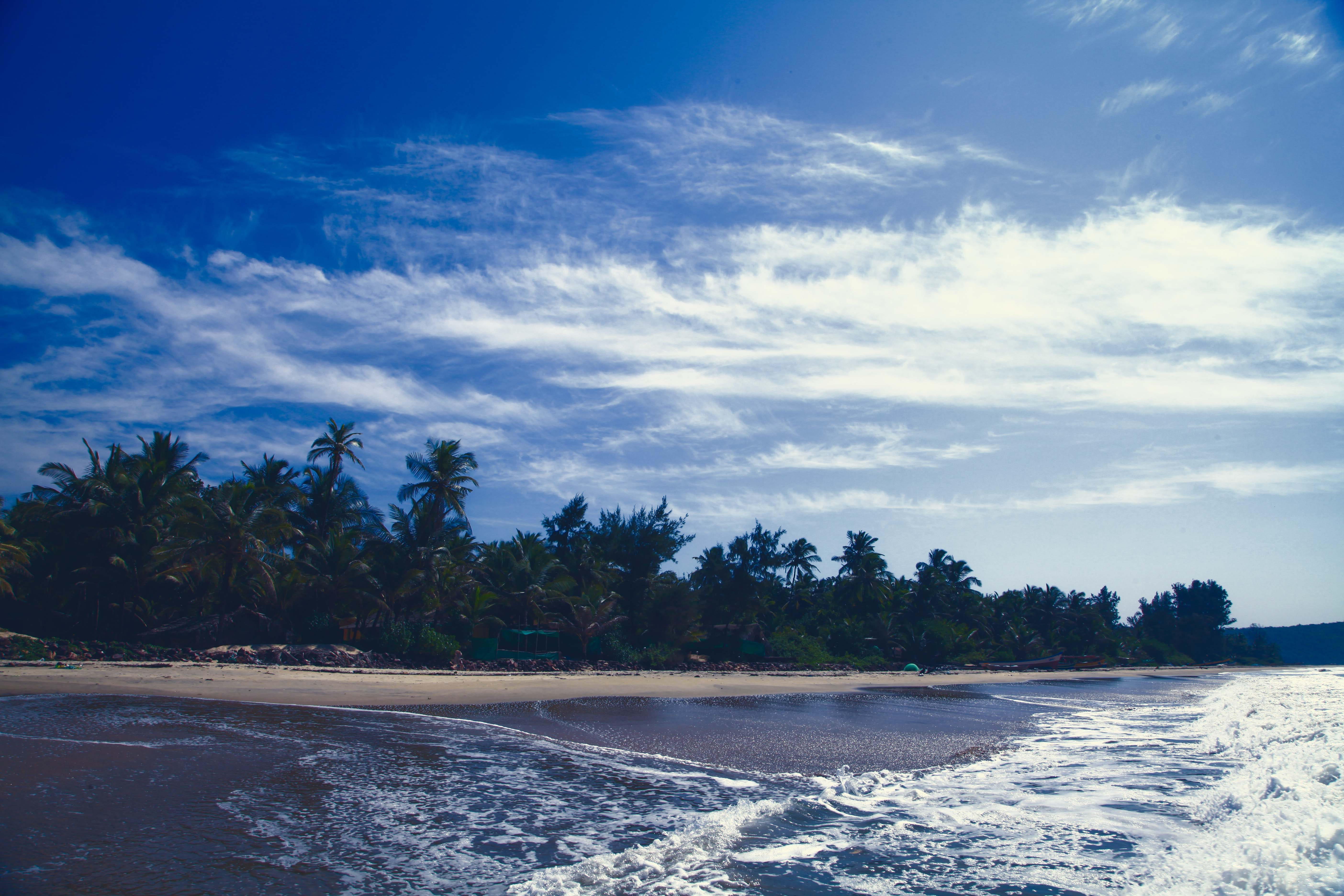 Landscape Photography of Coconut Tree Near Seashore