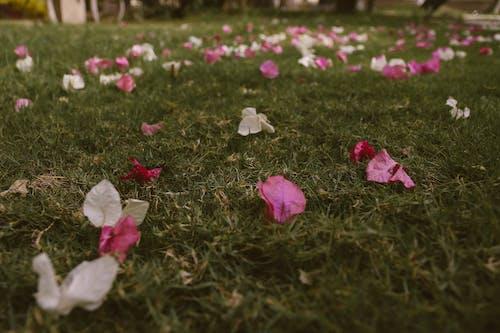 경치, 꽃, 꽃잎, 낮의 무료 스톡 사진
