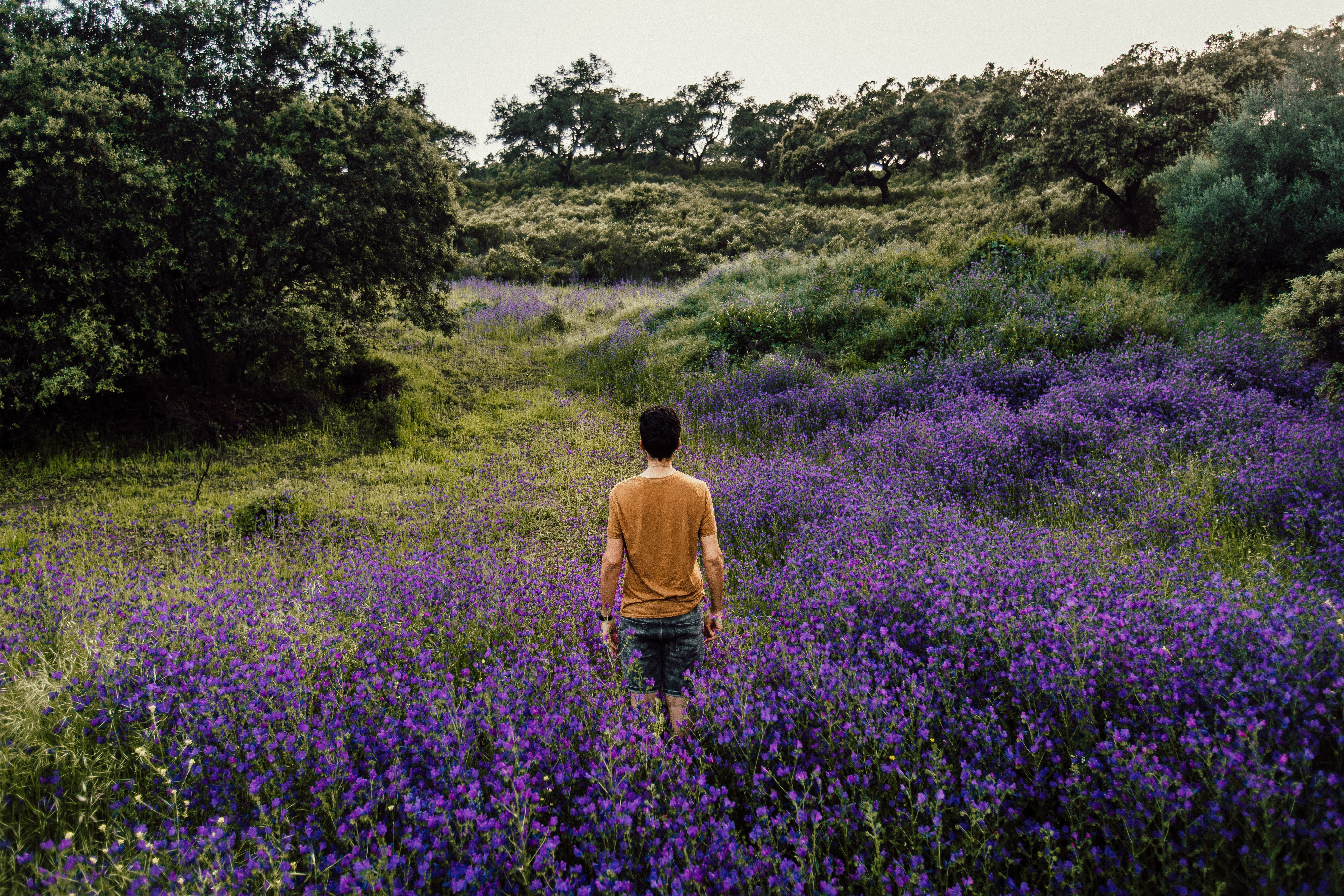 Person Standing on Bed of Lavender Flowers