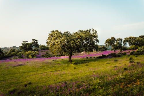 ağaçlar, alan, arazi, bitki örtüsü içeren Ücretsiz stok fotoğraf