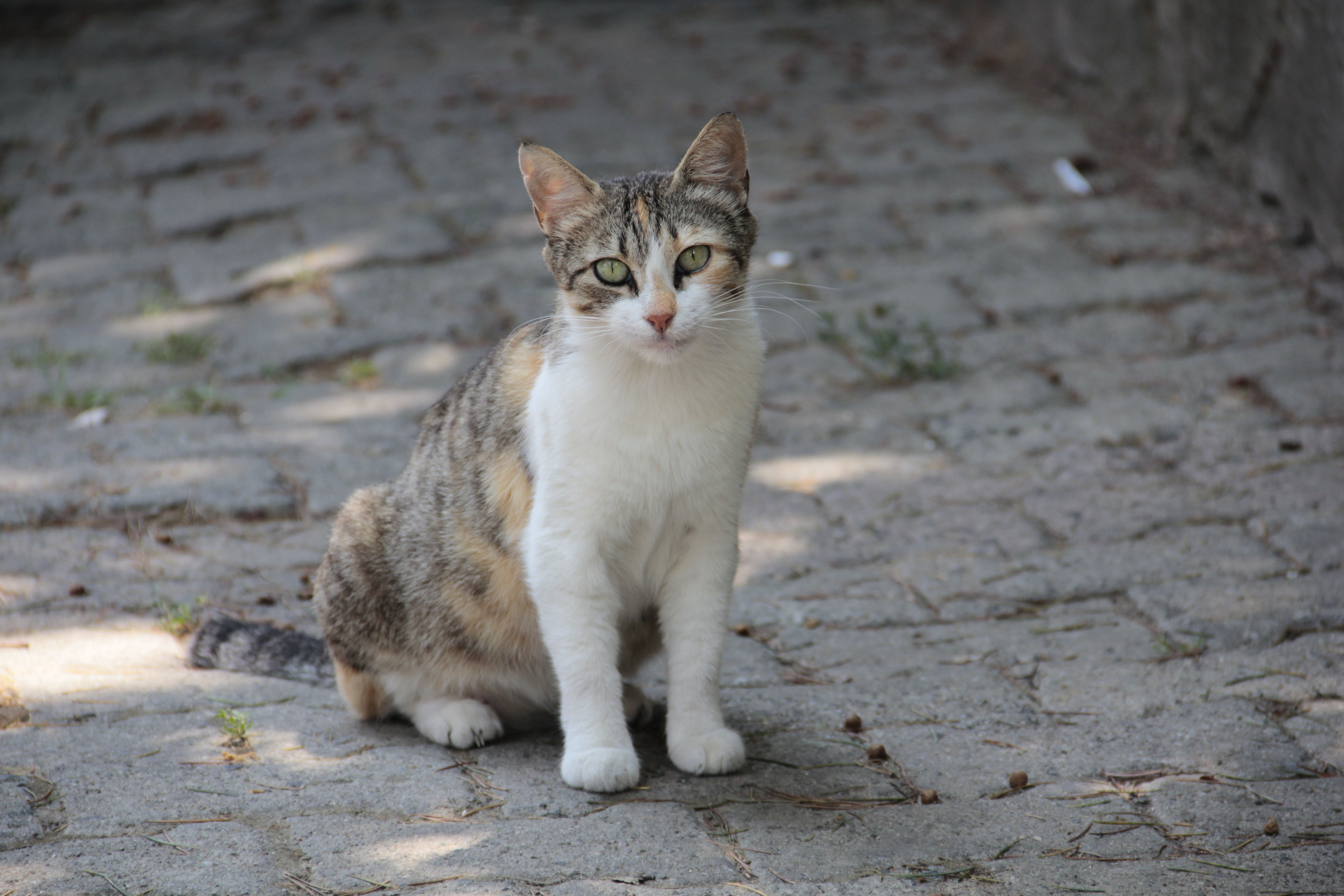 White and Brown Cat Sitting on Ground