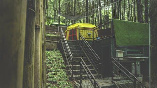 adımlar, ağaçlar, çadır, doğa içeren Ücretsiz stok fotoğraf
