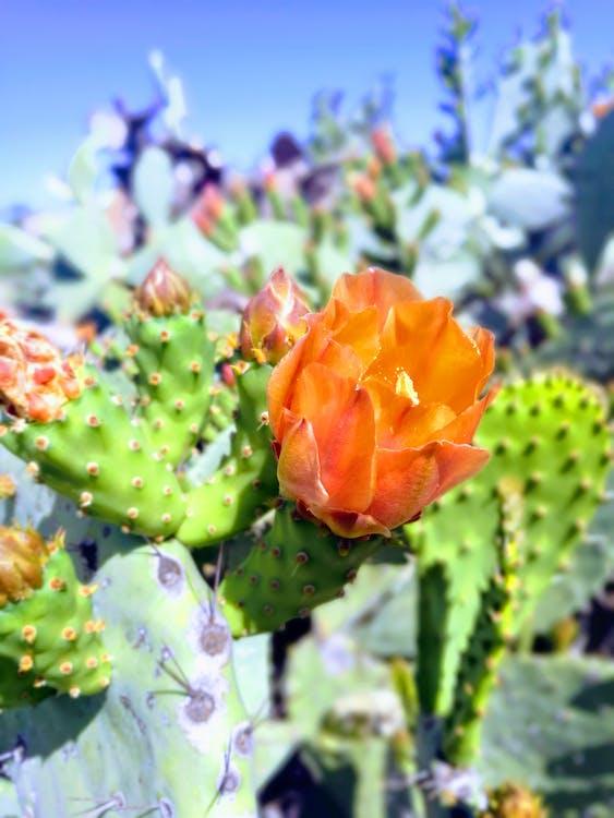 Green and Orange Cactus