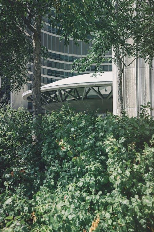 Kostenloses Stock Foto zu architektur, baum, blätter, dach