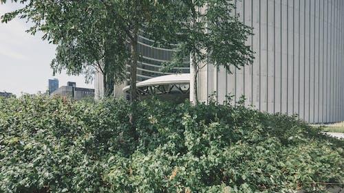 Foto d'estoc gratuïta de arbres, arbust, arquitectura, creixement