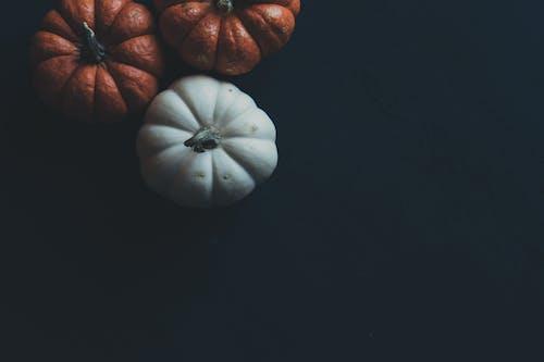 Základová fotografie zdarma na téma černé pozadí, dýně, festival, halloween