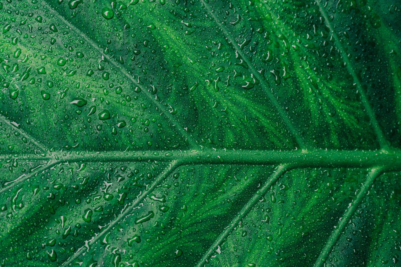 zu asymmetrie, botanisch, detail, flora