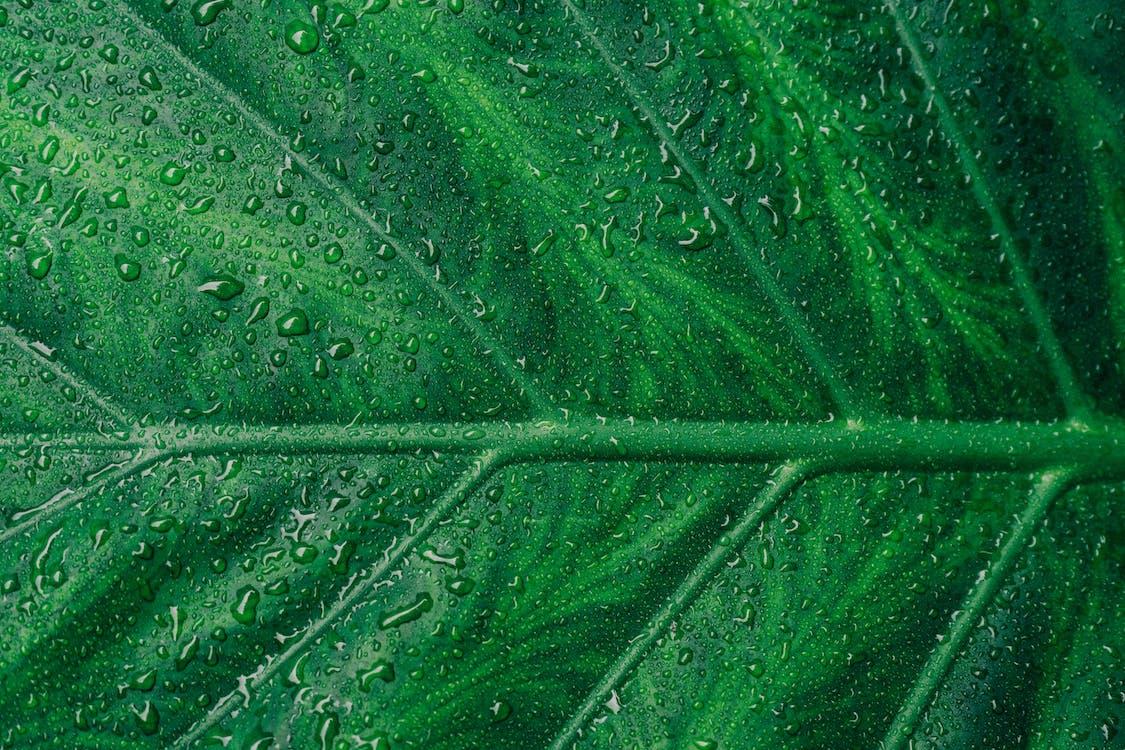 aigua, asimetria, botànic
