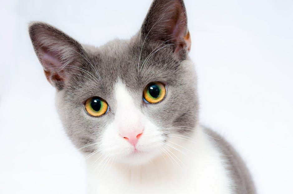 ¿Por dónde sudan los gatos?
