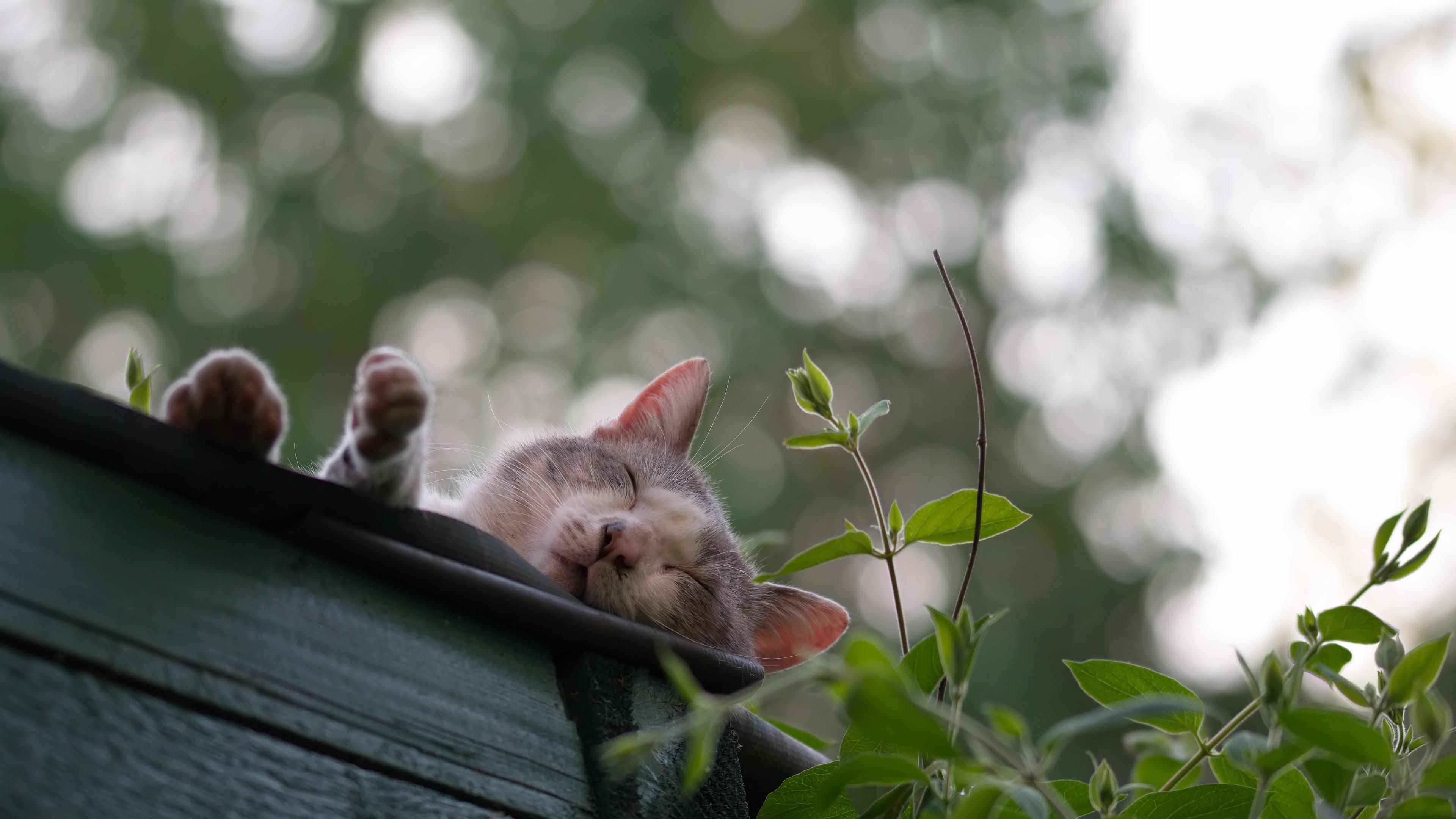 Photo of Gray Cat Near Sleeping