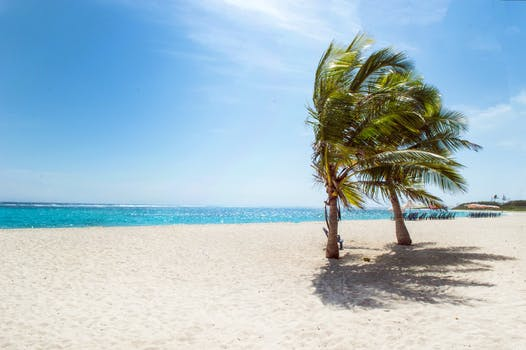 1000 interesting tropical beach photos pexels free stock photos