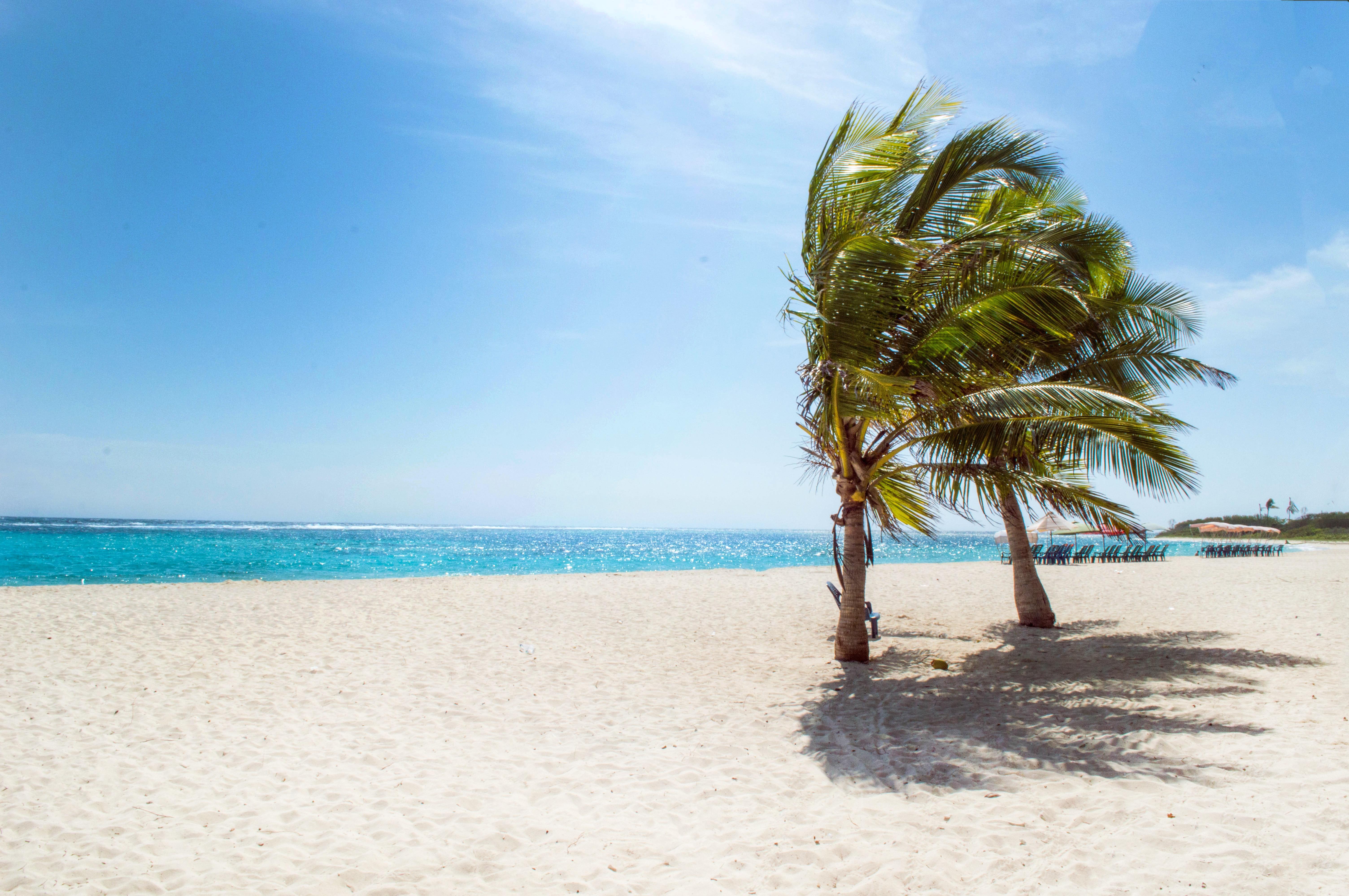 Green Coconut Trees Near Body Of Water 183 Free Stock Photo