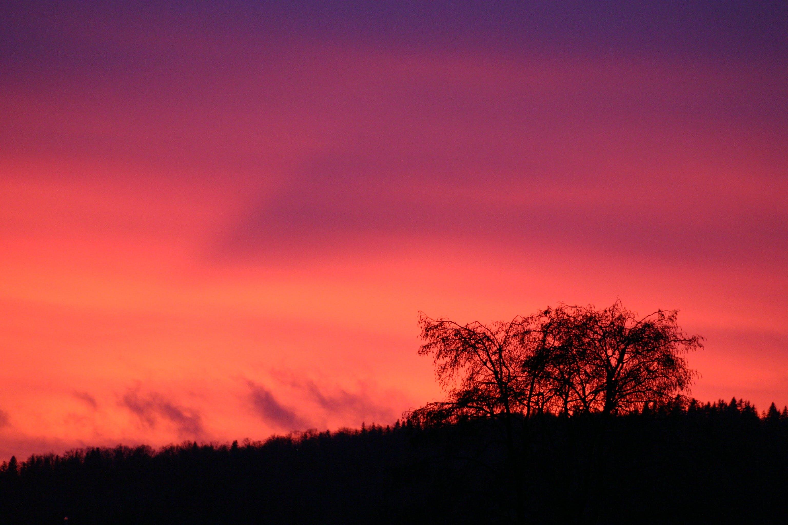 Fotos de stock gratuitas de amanecer, árbol, brillante, color
