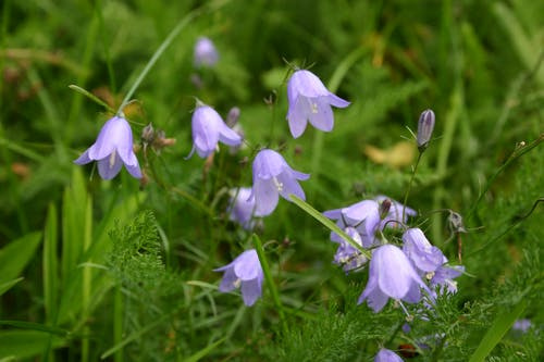 Close Up Photograph of Purple Petaled Flowers