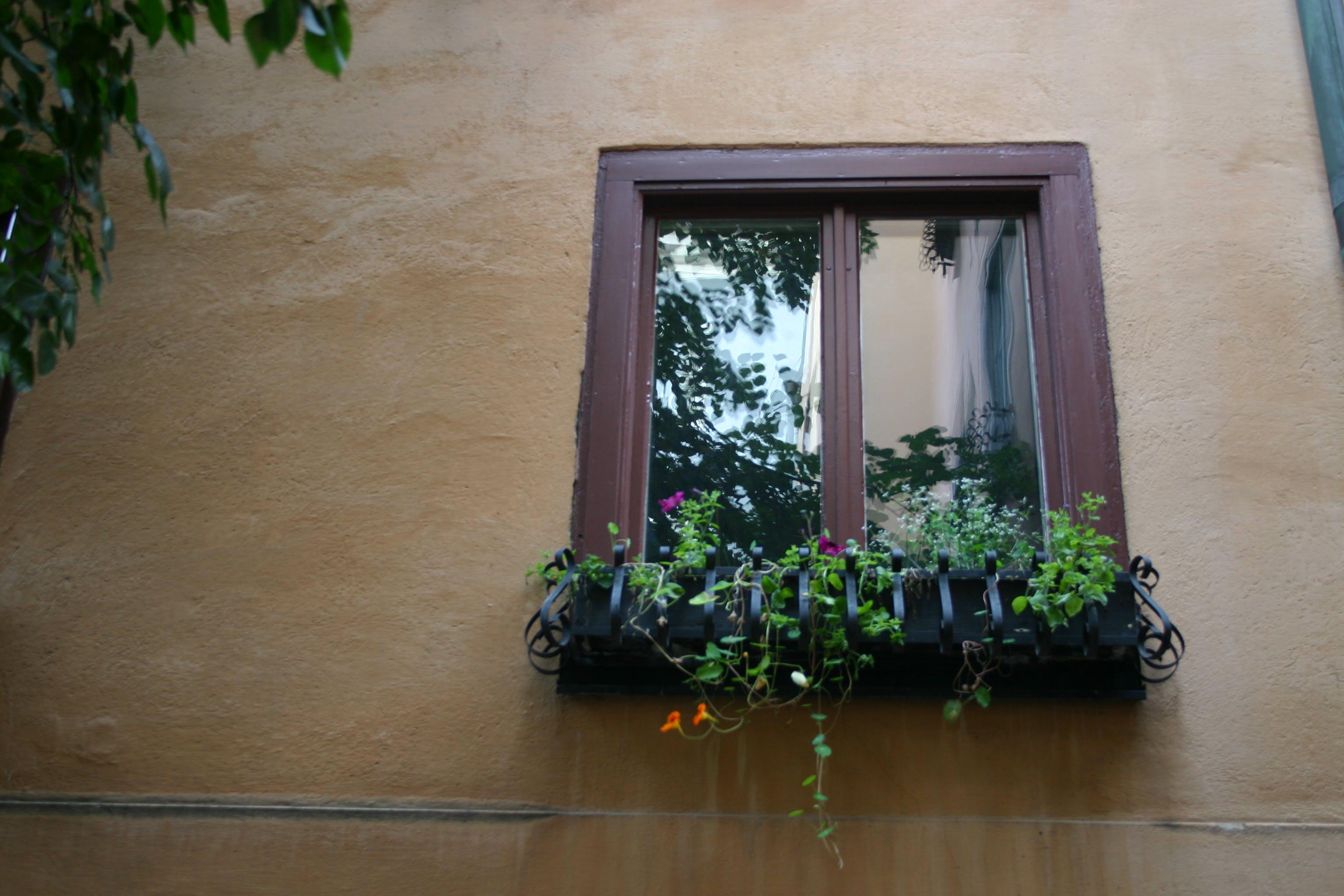 Brown Wooden 2-panel Window Beside Green Leaf Plants
