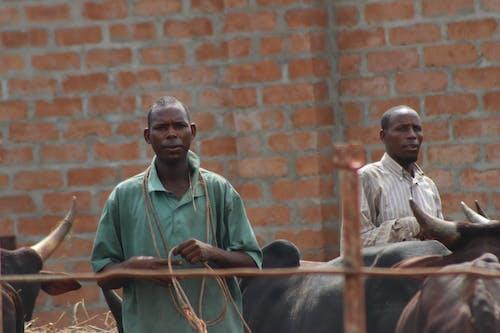 Fotos de stock gratuitas de pastores