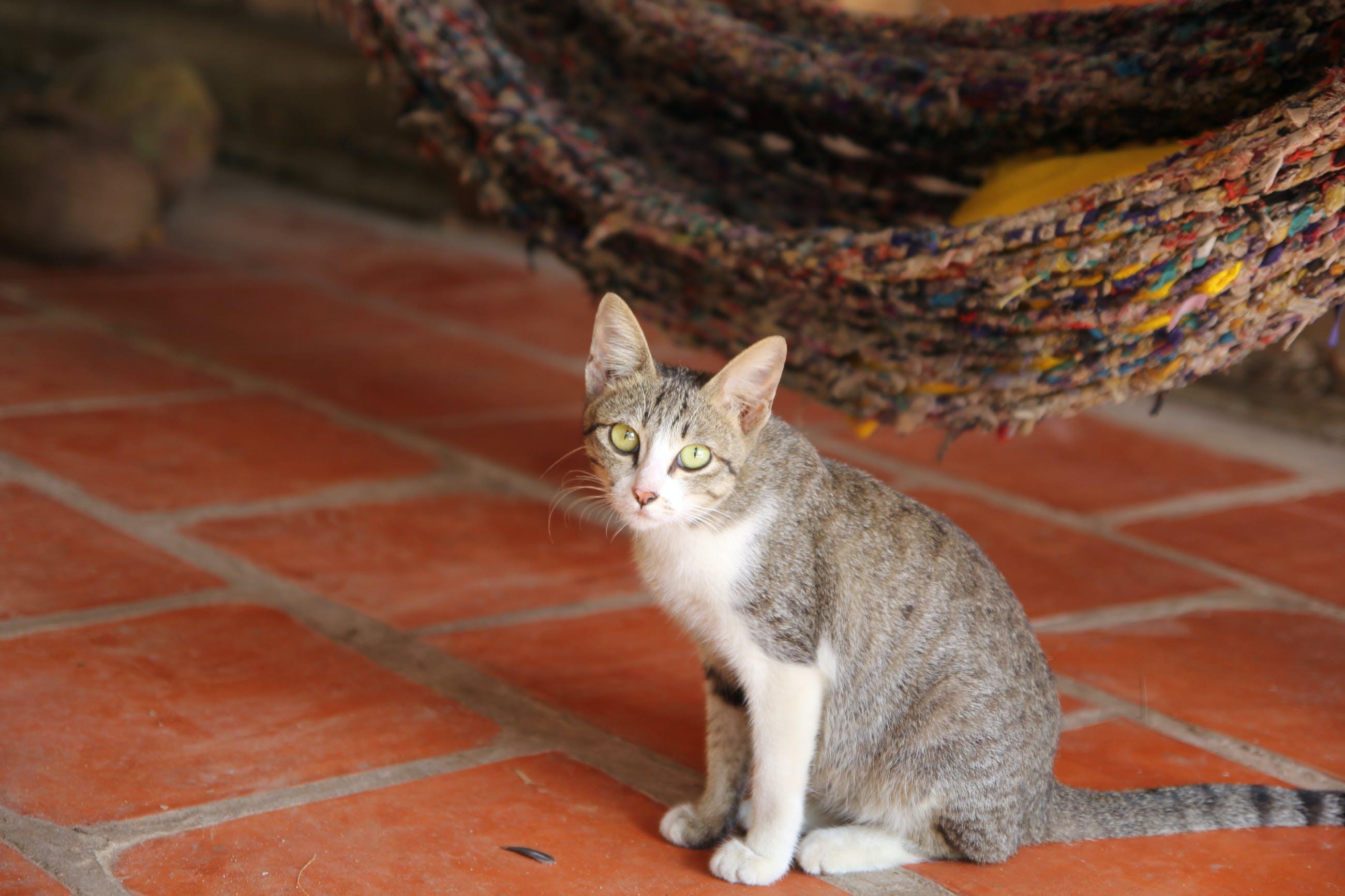 가정의, 개, 거리, 고양잇과 동물의 무료 스톡 사진