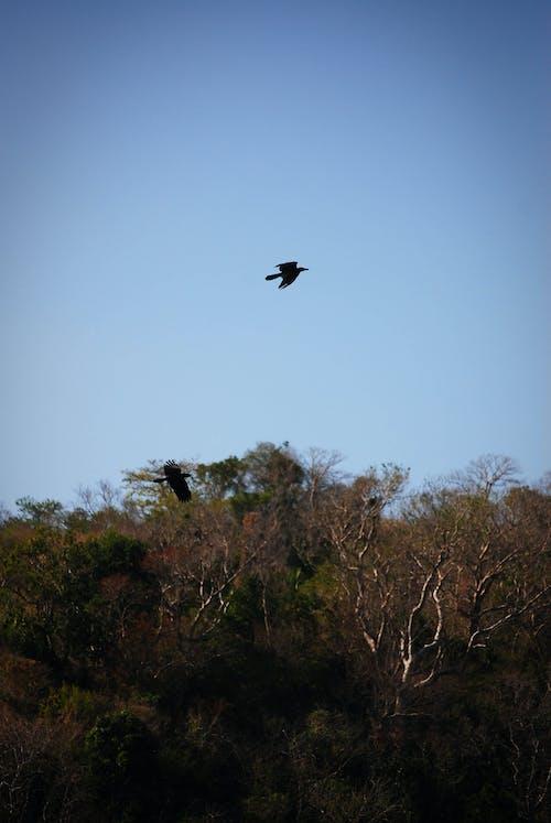 Бесплатное стоковое фото с батангаса, виньетка, ворона, лес