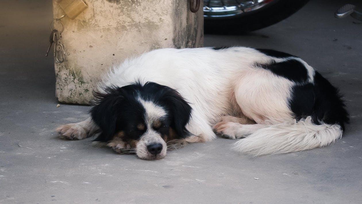 개, 내 강아지, 수면