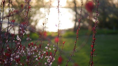 Bahçe, bitki örtüsü, büyüme, çiçek içeren Ücretsiz stok fotoğraf