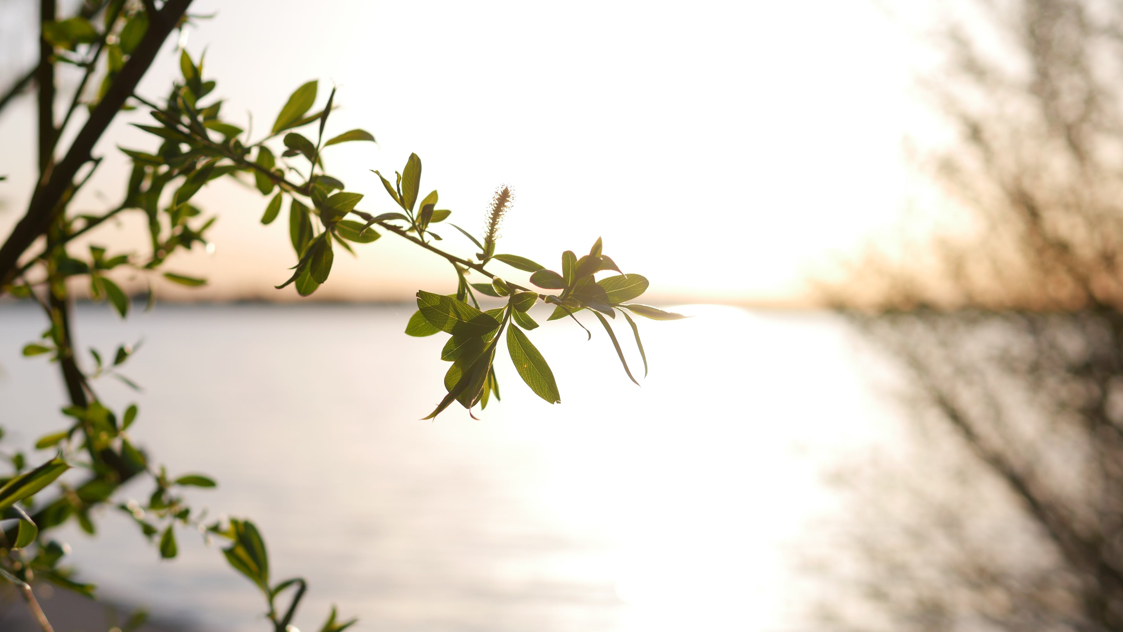 Selective Focus Photography of Leaf Tree Near Shore Line