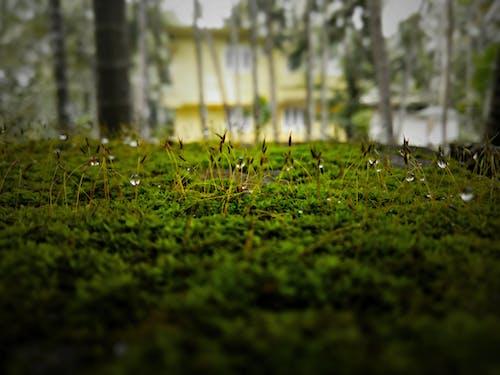 Darmowe zdjęcie z galerii z drewno, drzewo, flora, jasny