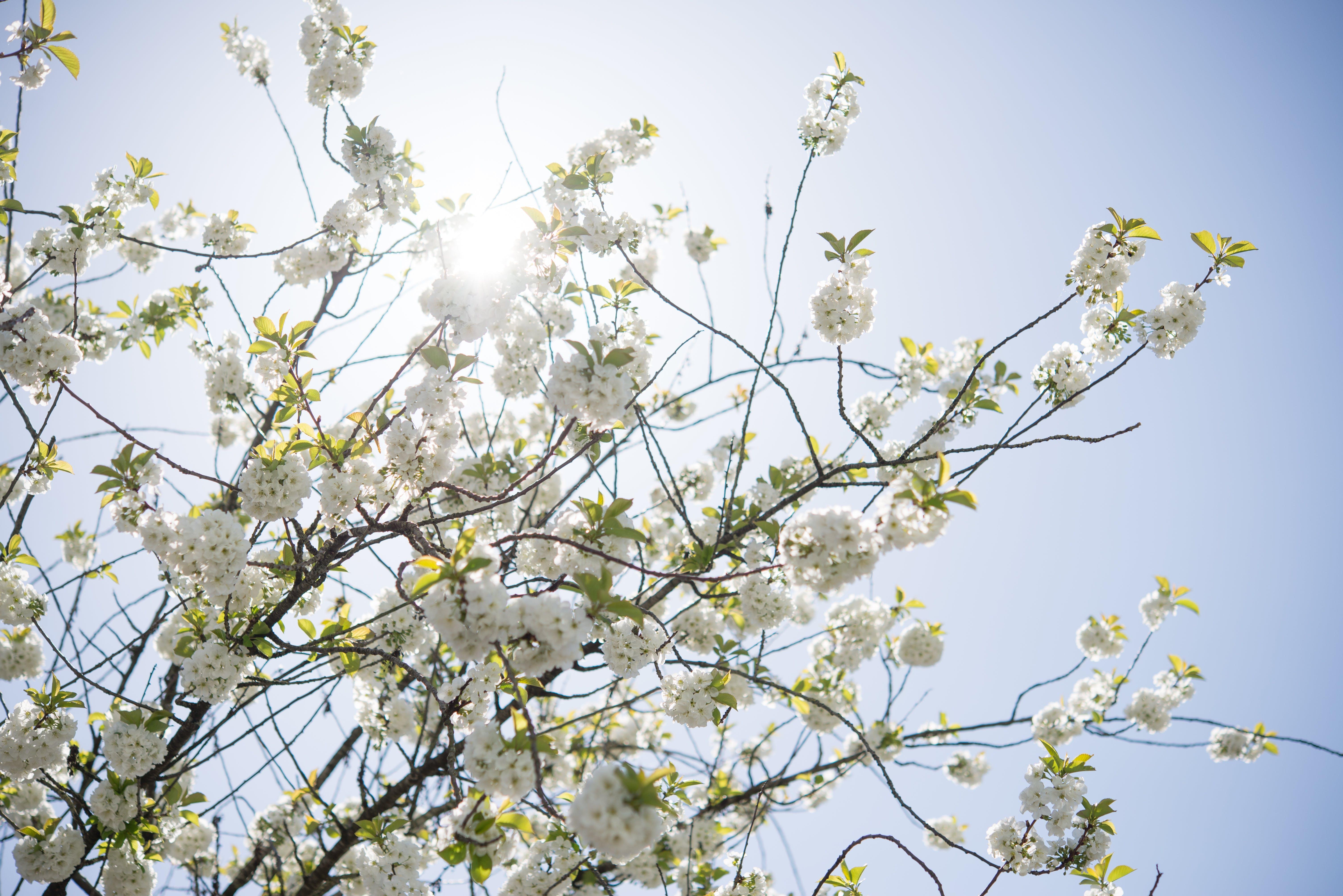 Yellow Petaled Flower Tree