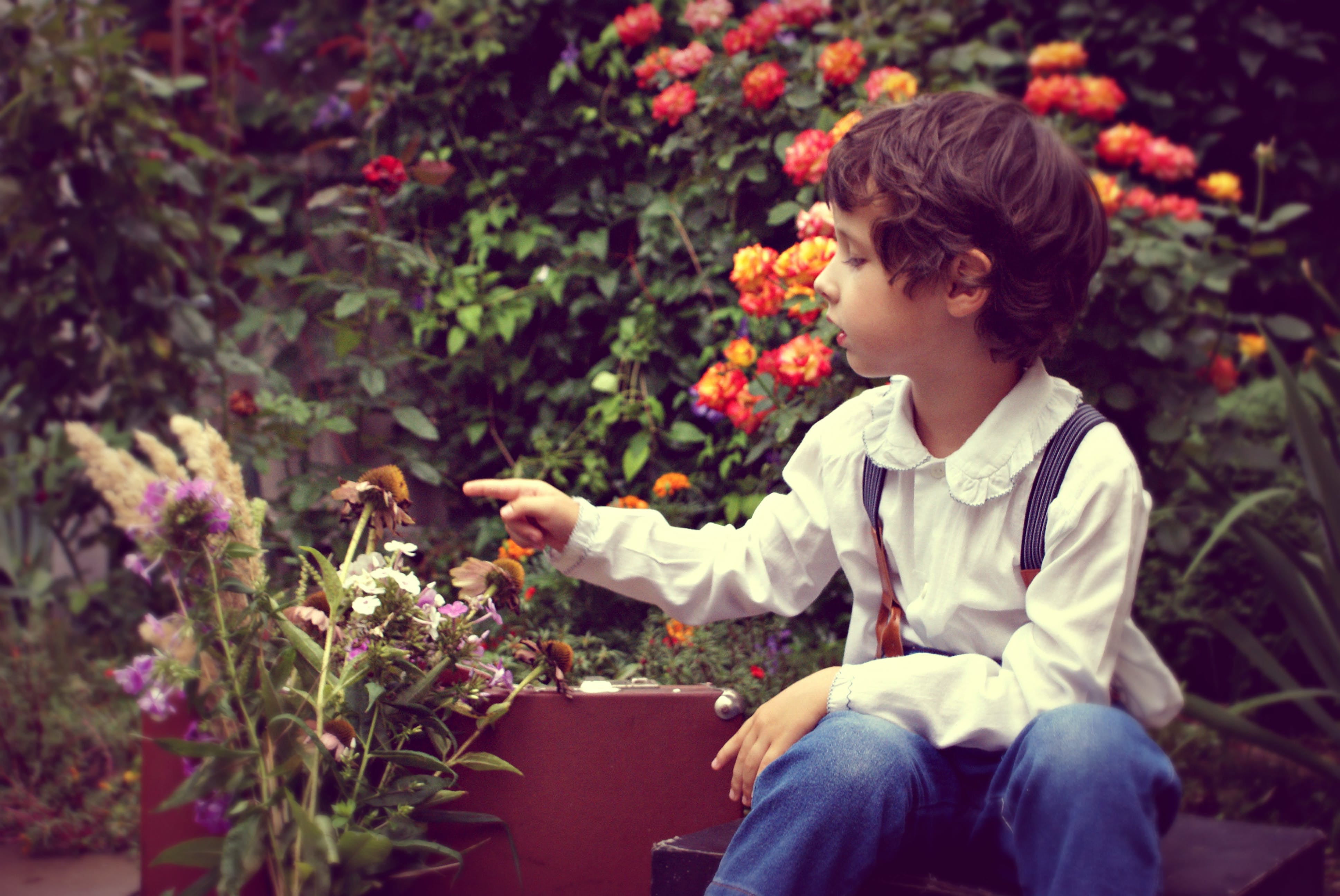 Photo of Boy Sitting and Touch Flowers