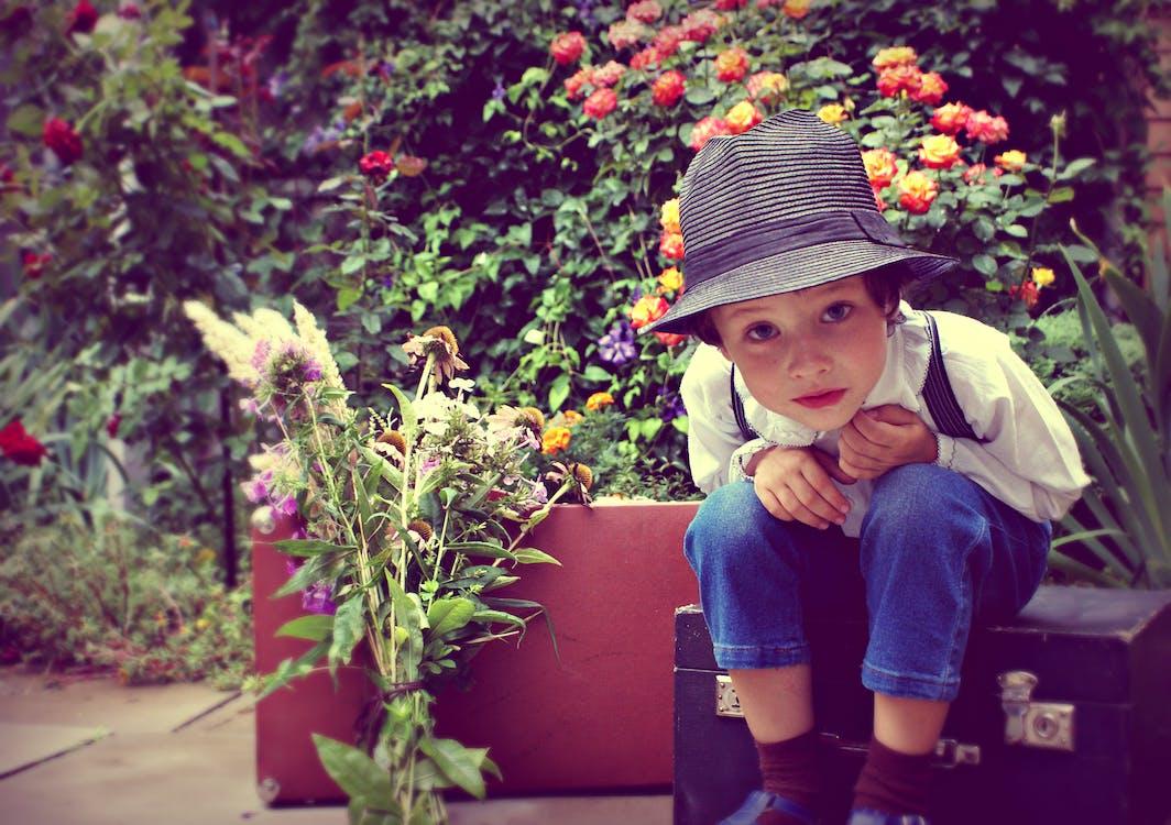 Free stock photo of boy, children, flowers