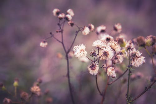 Белый Лепестковый Цветок