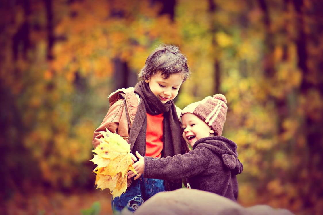 Two Boys Wearing Jacket Holding Yellow Maple Leaves