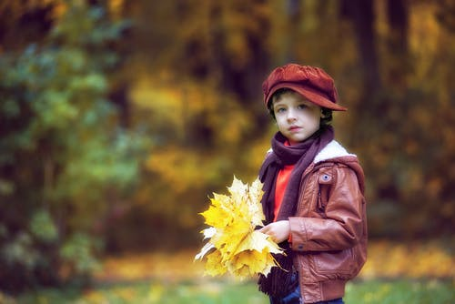 Free stock photo of autumn forest, boy, cap