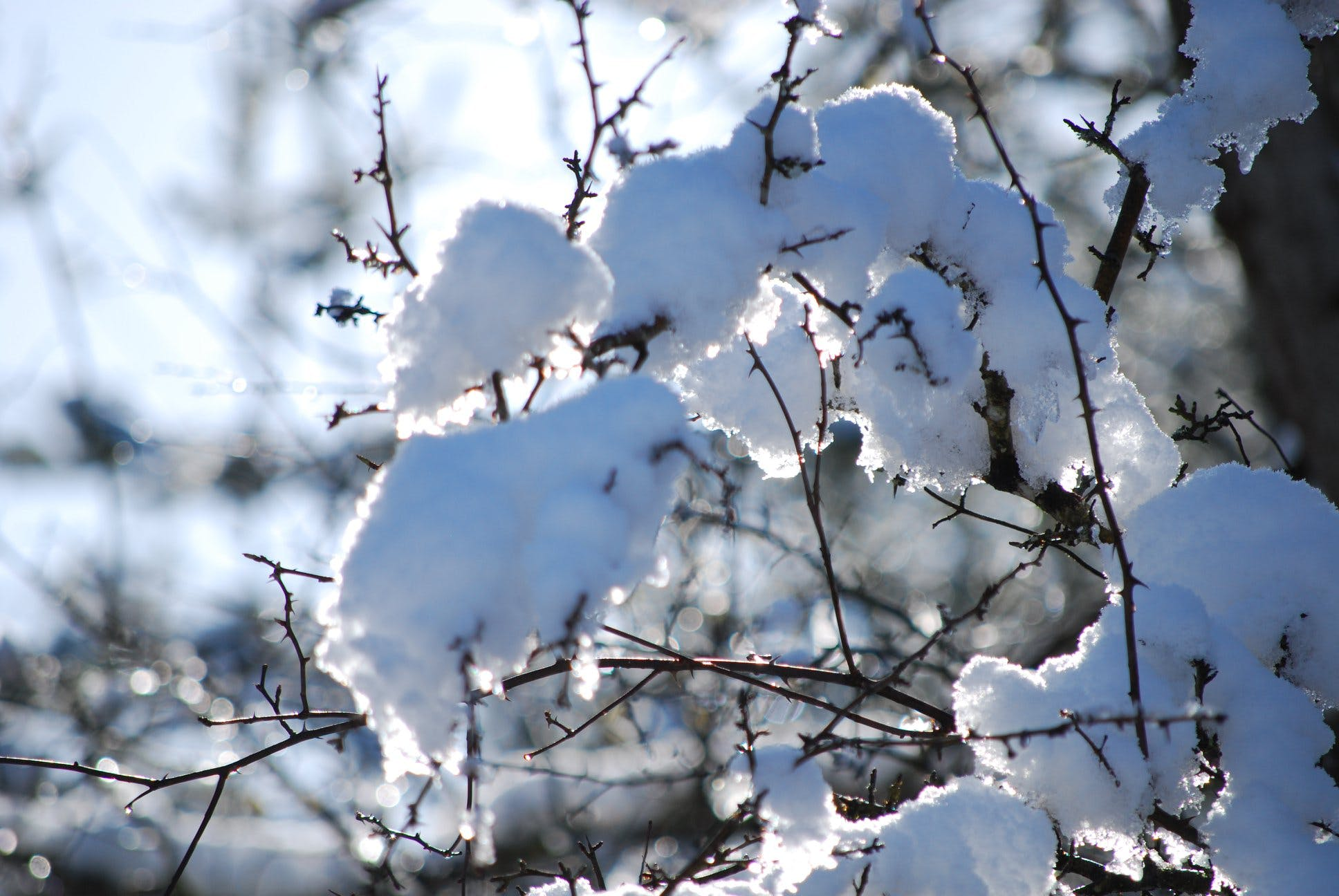 Selective Focus Photo of Tree Snow