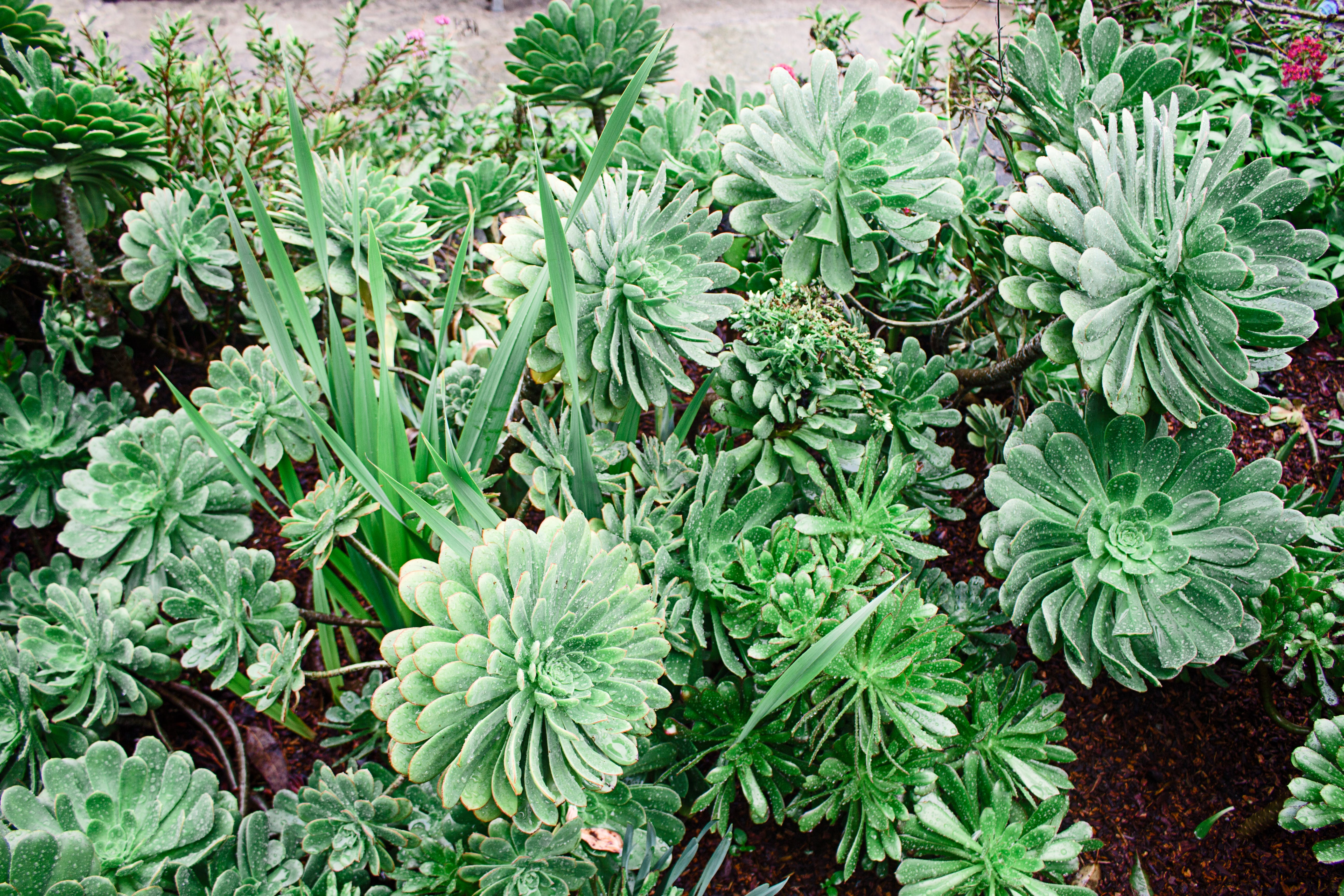 Green Succulent Potted Plants