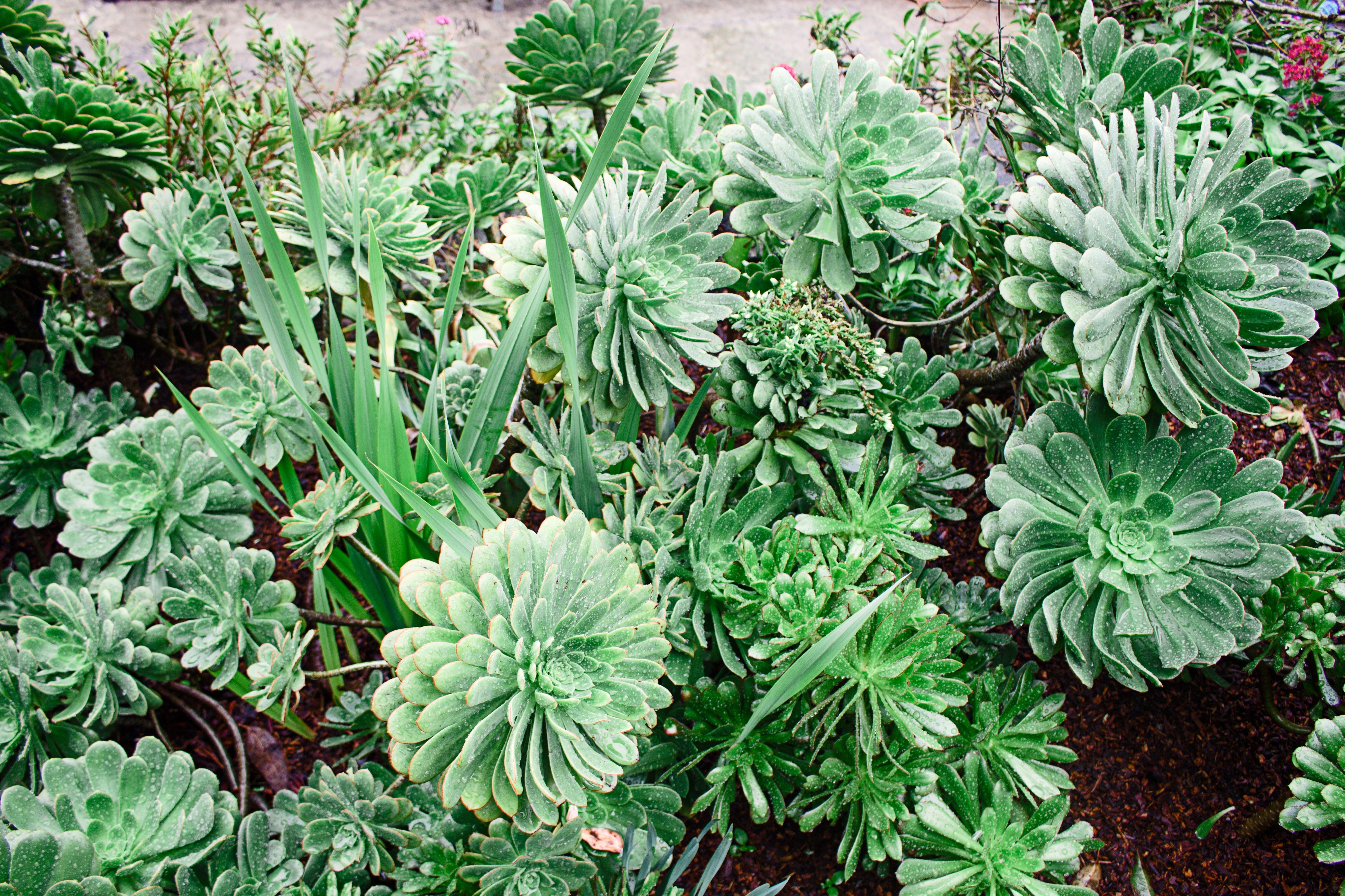 Foto d'estoc gratuïta de botànic, creixement, estiu, flor