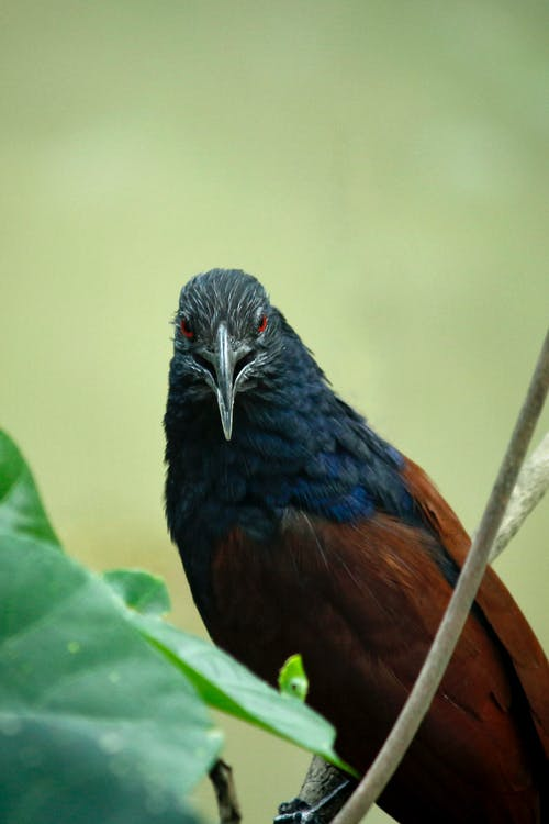 Closeup Photo of Black, Blue, and Brown Bird on Tree Branch