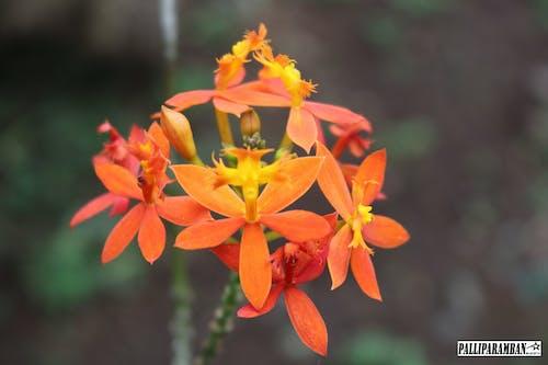 美麗的花朵 的 免费素材照片