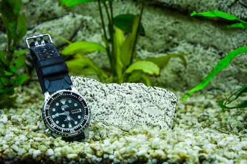 Imagine de stoc gratuită din acvariu, apă, culoare, fotografie de aproape
