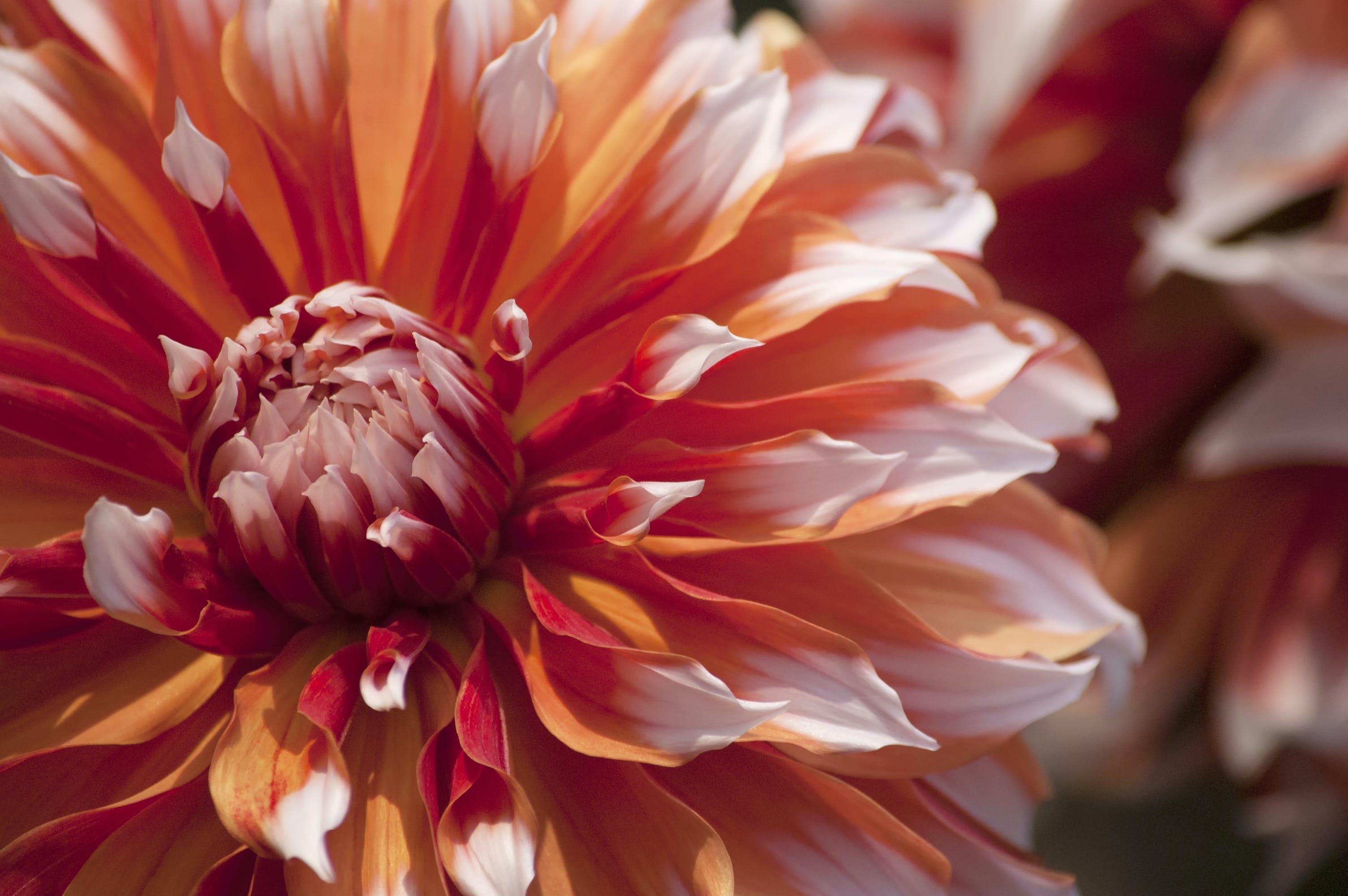 Foto profissional grátis de alegre, atraente, botânico, brilhante