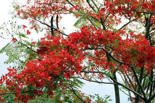 樹, 紅色 的 免费素材照片