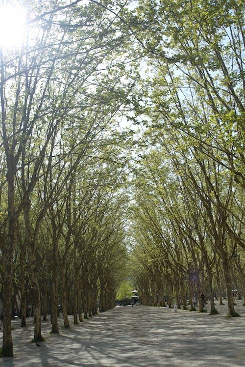 Foto profissional grátis de árvore, brilho do sol, natureza