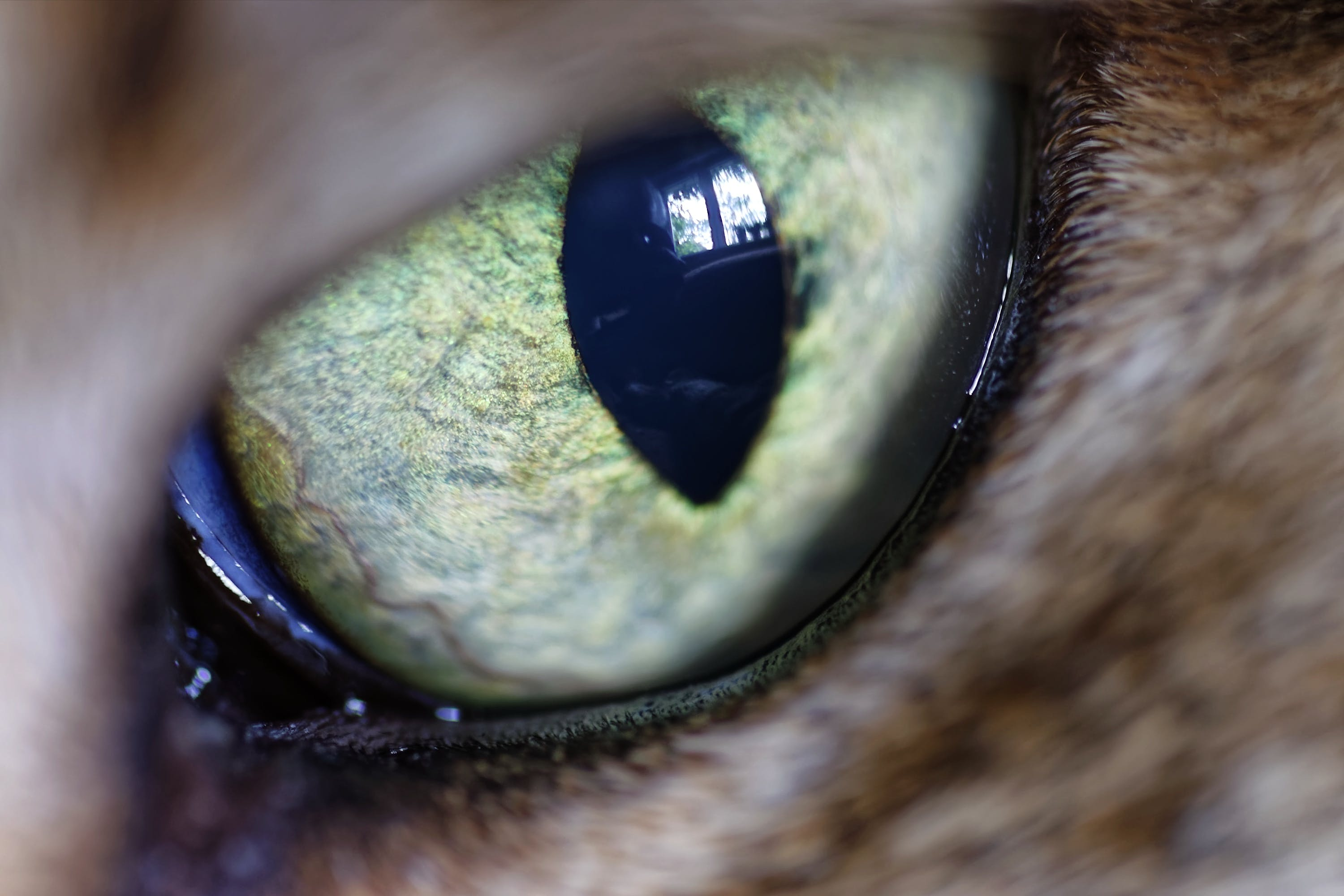Animal's Green Eye